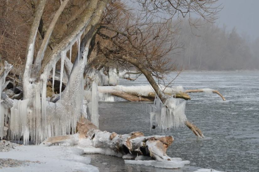 ice coated shoreline and trees, lake ontario, ontario, canada, 36