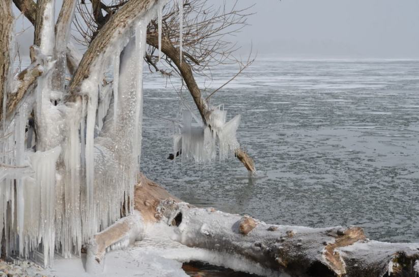 ice coated shoreline and trees, lake ontario, ontario, canada, 4