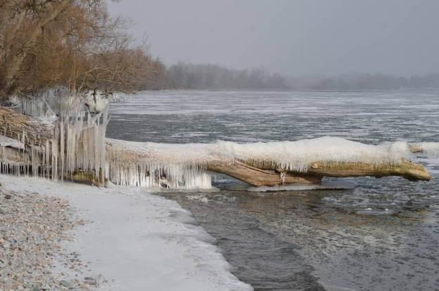 ice coated shoreline and trees, lake ontario, ontario, canada, 6