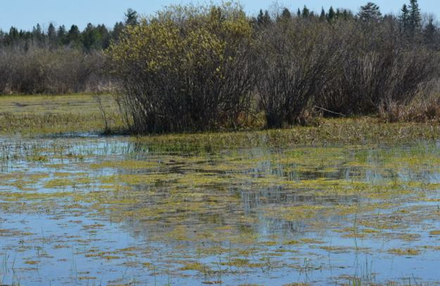 wetlands, carden alvar, city of kawartha lakes, ontario, pic 4