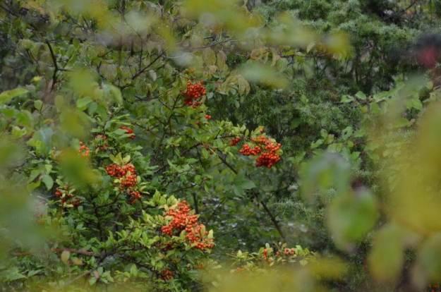 Fall colour at Il Colombaio di Cencio, Gaiole, Chianti, Tuscany, Italy 2