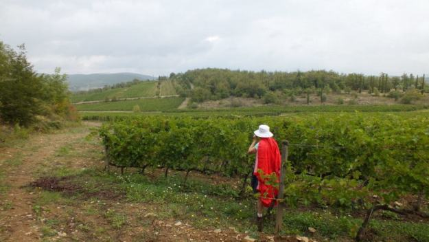 Jean in vineyard at Il Colombaio di Cencio, Gaiole, Chianti, Tuscany, Italy