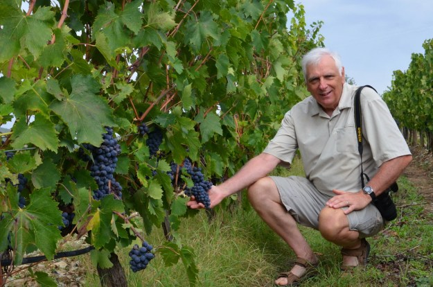 bob holds grapes on the vine at il colombaio di cencio vineyard, gaiole in chianti, itay