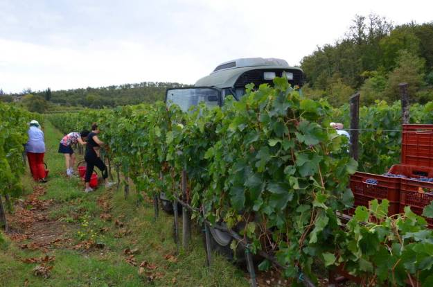 women cut grapes beside grape wagon at il colombaio di cencio vineyard, gaiole in chianti, itay