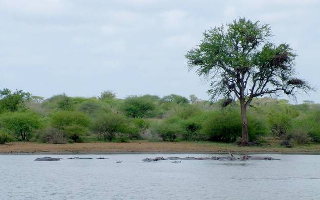 hippopotamus-in-the-water-at-sunset-dam-near-lower-sabie-rest-camp-in-kruger-national-park-south-africa-2