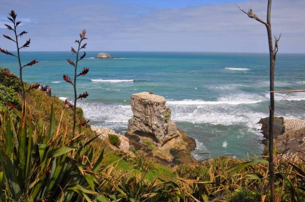 coastline-at-the-muriwai-gannet-colony-waitakere-new-zealand