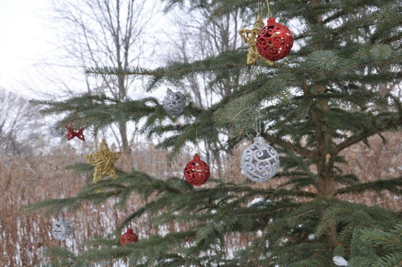 decorations-on-the-christmas-tree-at-lynde-shores-conservation-area-whitby-ontario-3