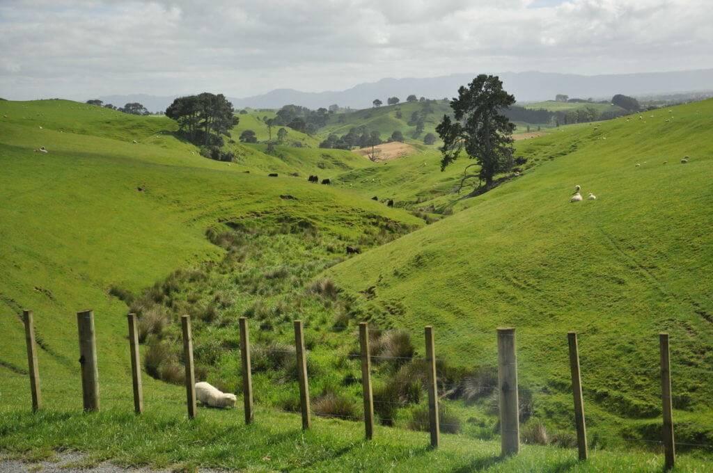 alexander-sheep-farm-the-home-of-hobbiton-movie-set-north-island-new-zealand