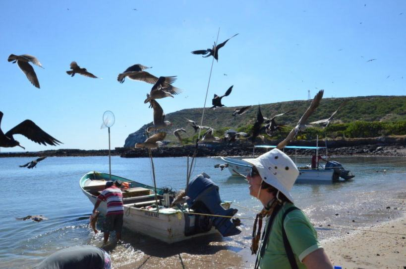 An image of birds flying above Jean in the harbour on Isla Isabel off San Blas, Mexico. Photography by Frame To Frame - Bob and Jean.