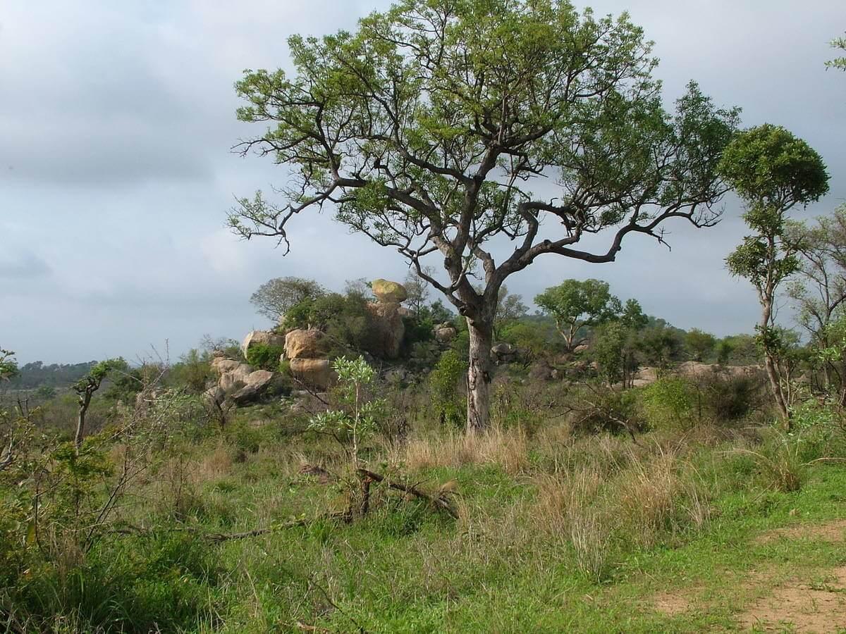 the gallery for gt kruger national park landscape with