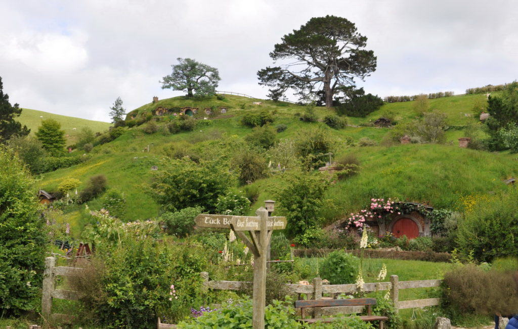 party-tree-sitting-above-the-shire-at-hobbiton-new-zealand