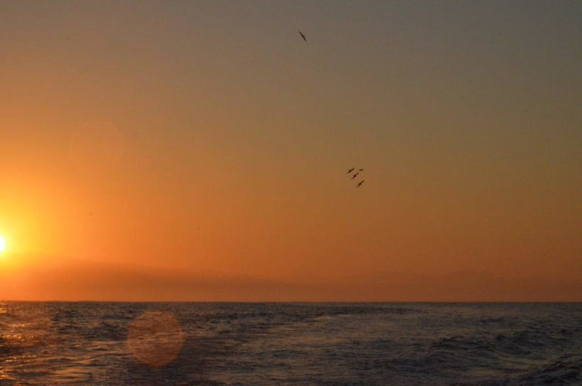 An image of birds in flight as the Sun rises above the horizon over the Pacific Ocean off San Blas, Mexico. Photography by Frame To Frame - Bob and Jean.