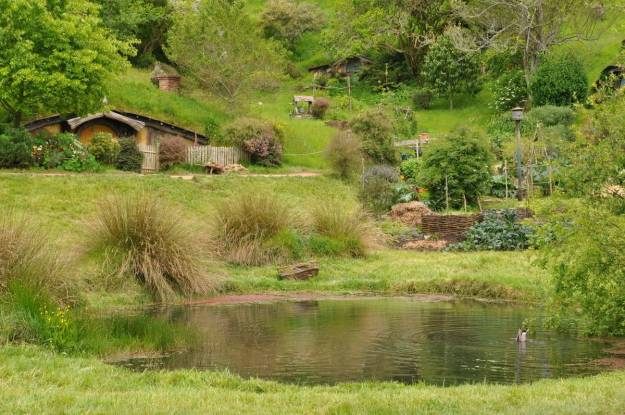 An image of the frog pond with a duck hunting for food on the bottom at Hobbiton in New Zealand. Photography by Frame To Frame - Bob and Jean.