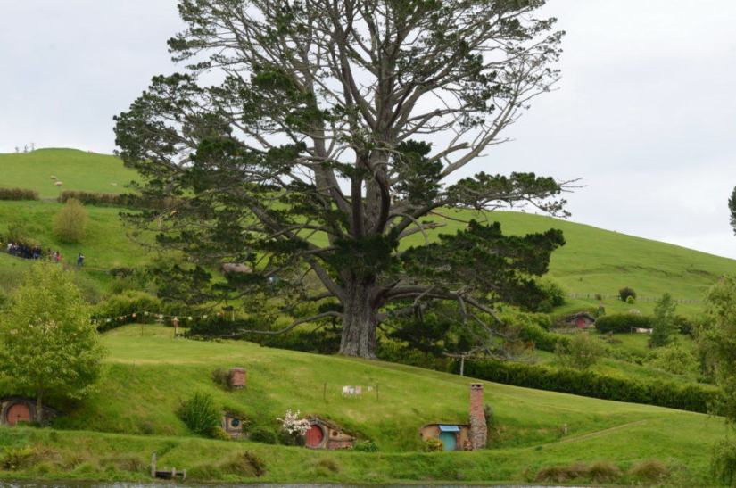 An image of the Party Tree sitting on the side of a hill at Hobbiton in Matamata, New Zealand. Photography by Frame To Frame - Bob and Jean