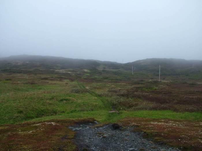 a trail through the bog, quirpon island, newfoundland, canada