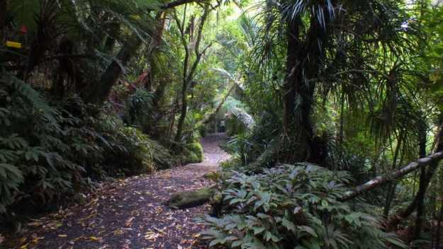 An image of a hiking trail in the Waitakere Ranges Regional Park near Auckland, New Zealand.