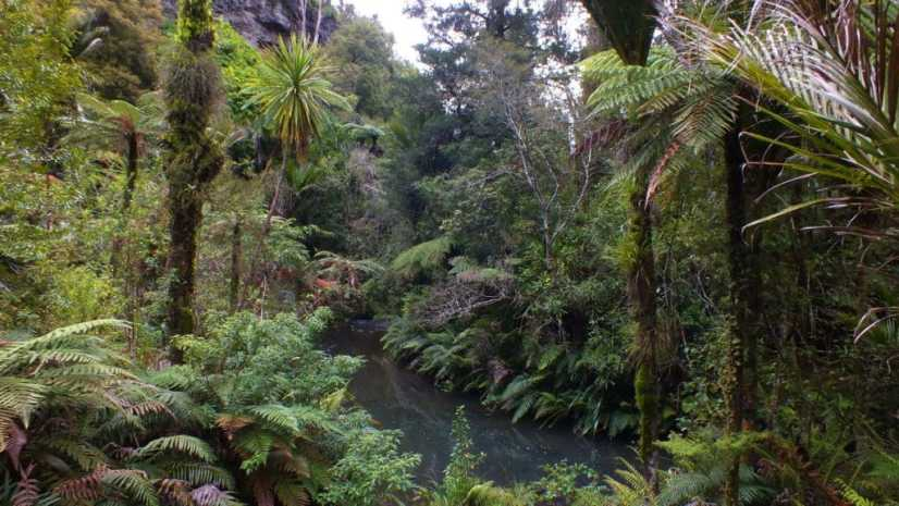 An image of a stream and forest in the Waitakere Ranges Regional Park near Auckland, New Zealand.