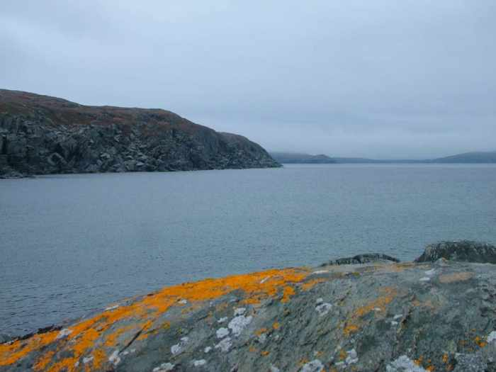 coastal rocks and lichen on quirpon island, newfoundland, canada