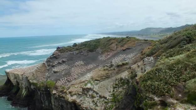 otakamiro point at muriwai beach, north island, new zealand