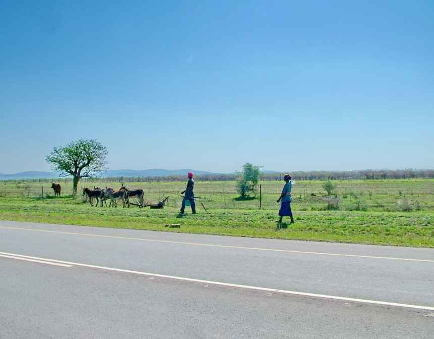 people with a team of mules in swaziland, africa