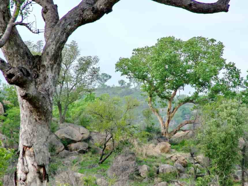 landscape in kruger national park, south africa
