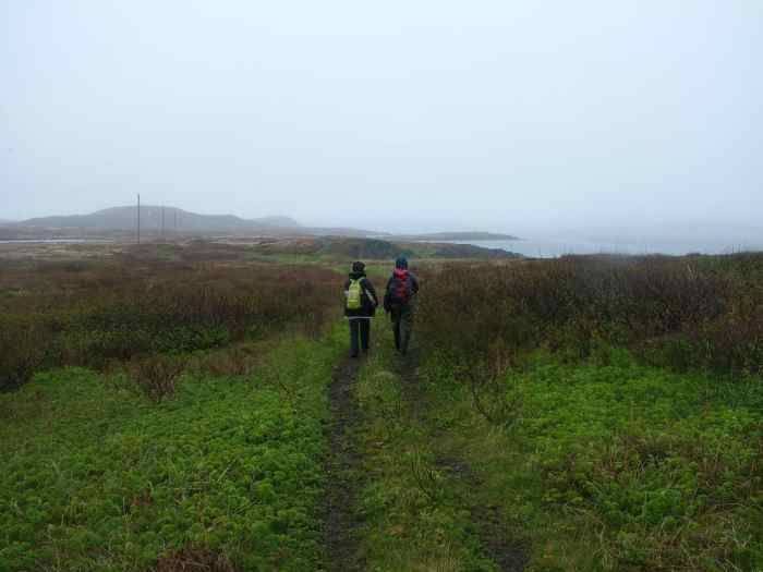 trail to Grandmother's Cove on quirpon island, newfoundland, canada