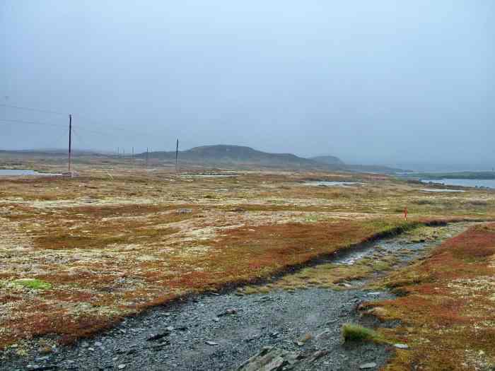 colourful lichen spreads across quirpon island, newfoundland, canada