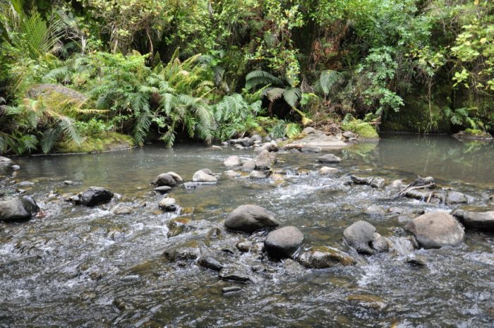 a stream, ark in the park, waitakere ranges regional park, north island, new zealand