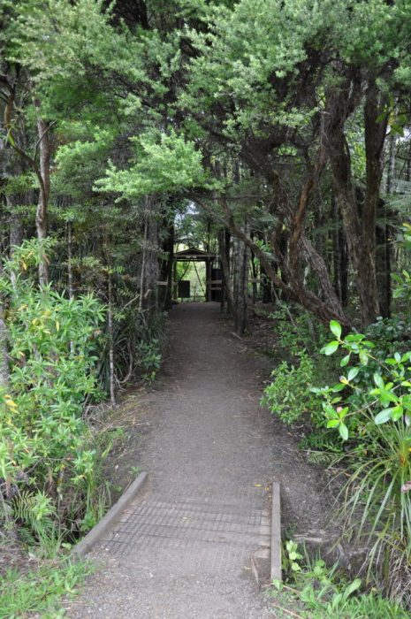 control gate, ark in the park, waitakere ranges regional park, north island, new zealand