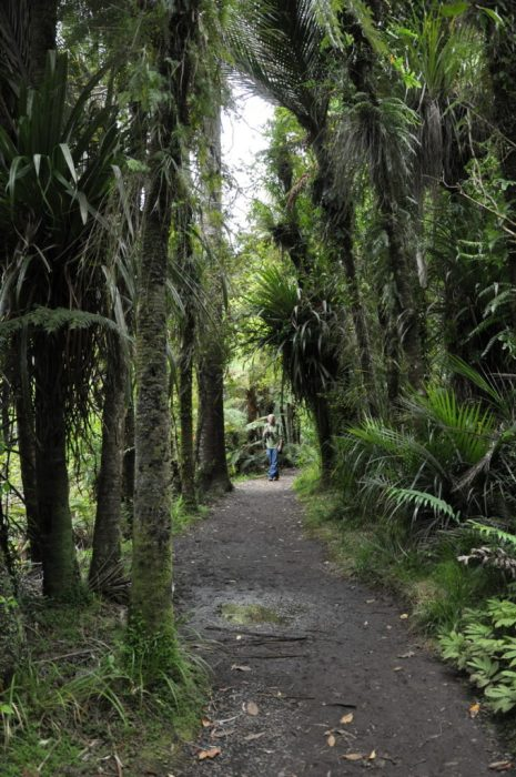 jungle trail, ark in the park, waitakere ranges regional park, north island, new zealand