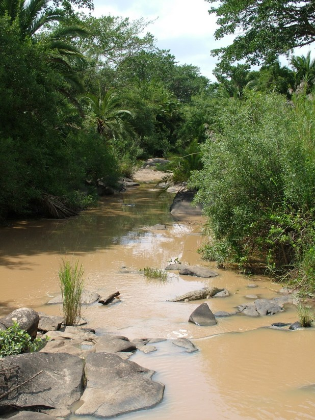 muddy river in hluhluwe-imfolozi, south africa