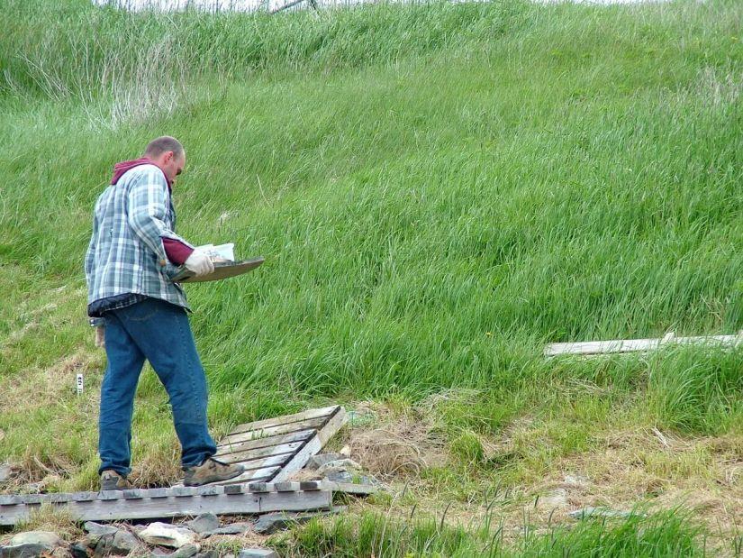 archeologist at work, colony of avalon, newfoundland, canada