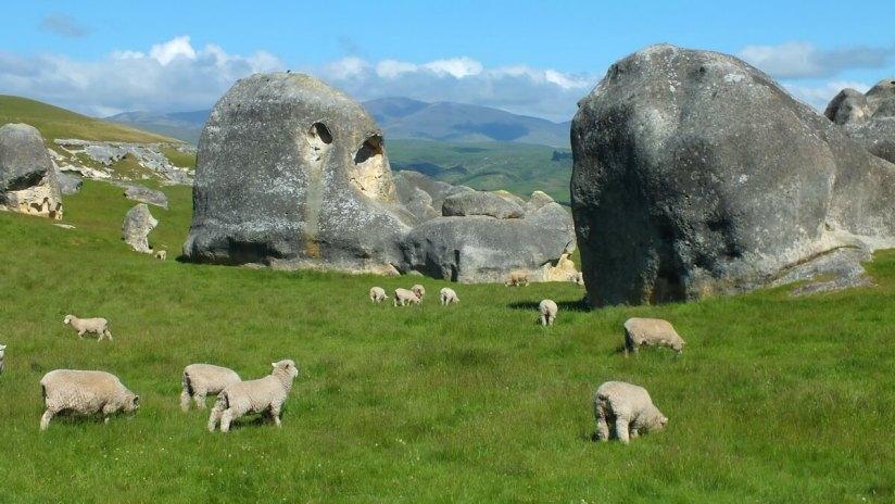 pastureland with sheep and elephant rocks, duntroon, new zealand