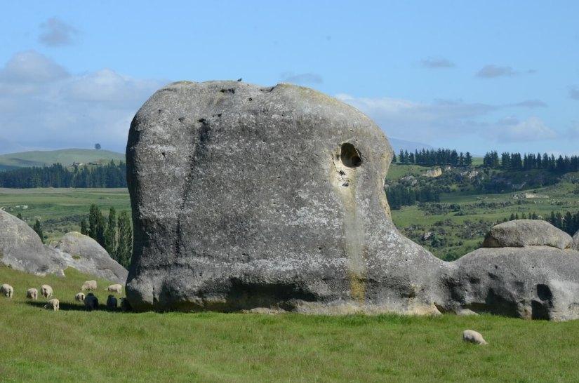 an elephant-shaped elephant rock, waitaki region, south island, new zealand