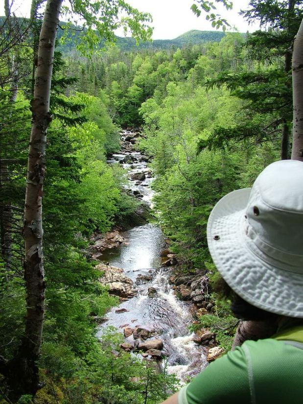 stream below gros morne mountain, newfoundland, canada