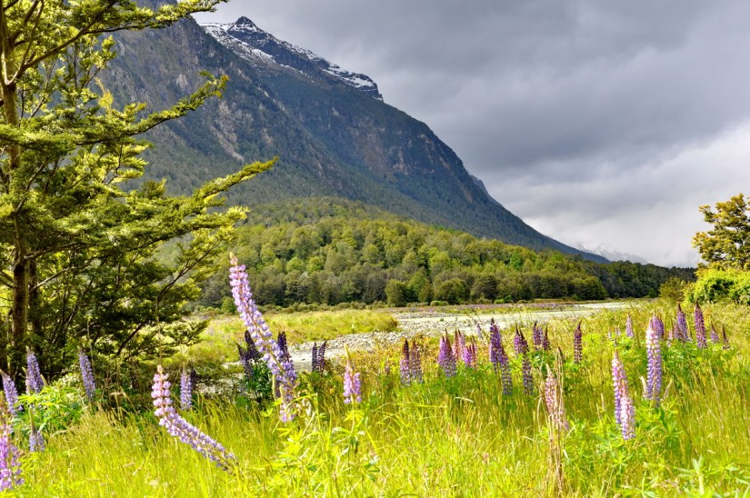 the earl mountains, eglinton river valley, fiordland national park, new zealand