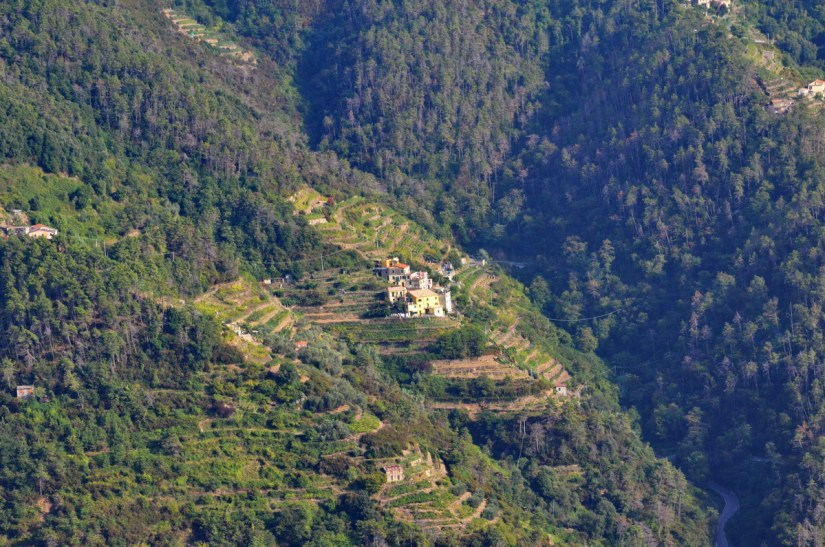 terraced mountainside, cinque terre, italy