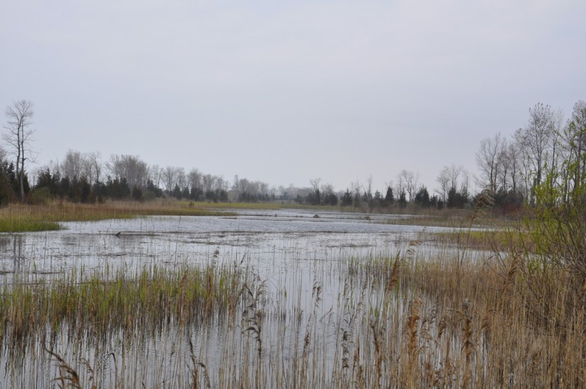 marshland, the tip of long point, lake erie, ontario