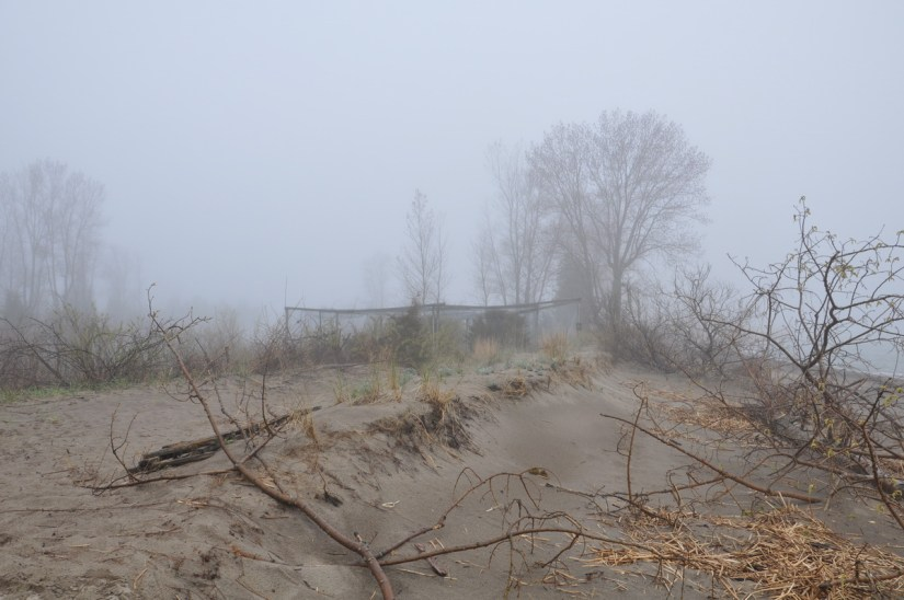 sand dunes and mist net, the tip of long point, lake erie, ontario