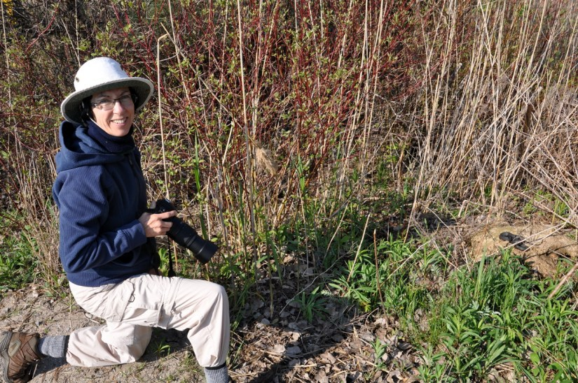 jean photographing a melanistic eastern garter snake, crown marsh, long point, ontario