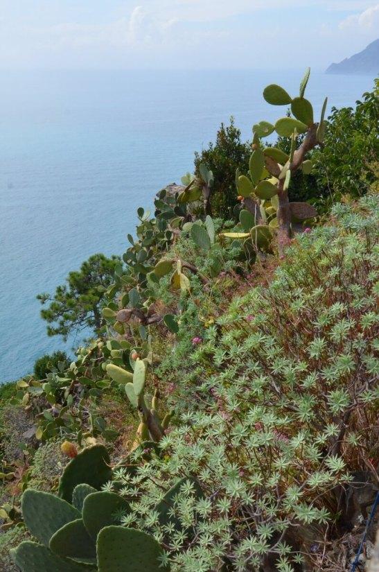cacti and succulents, corniglia, cinque terre, italy