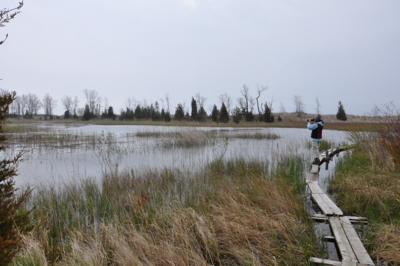 marsh boardwalk, the tip, long point, ontario