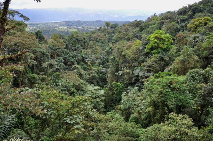 a view of the forest canopy, mistico arenal hanging bridges park, la fortuna, costa rica