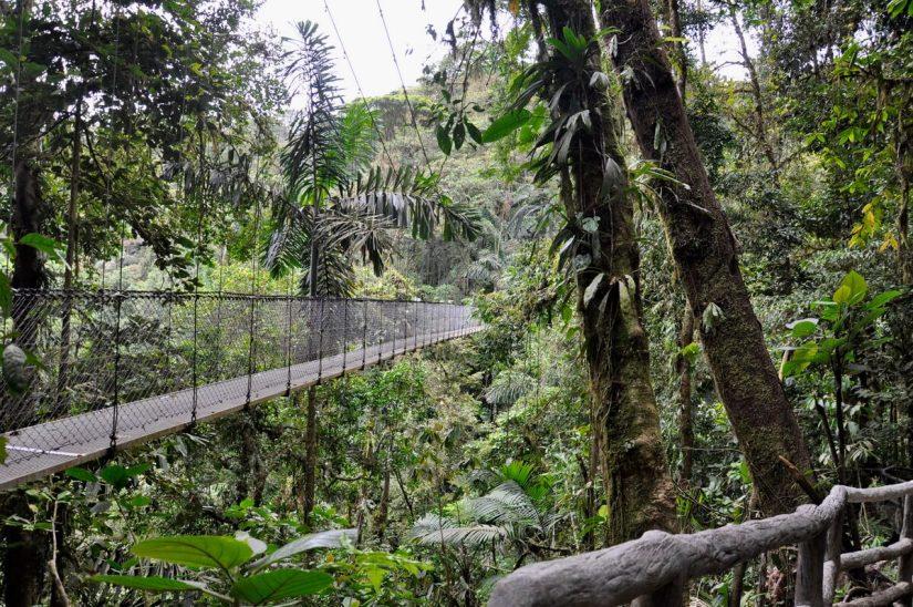 a hanging bridge, mistico arenal hanging bridges park, la fortuna, costa rica
