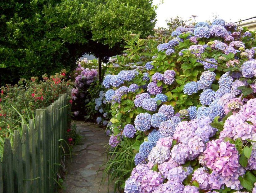a cottage garden, tintagel, cornwall, england