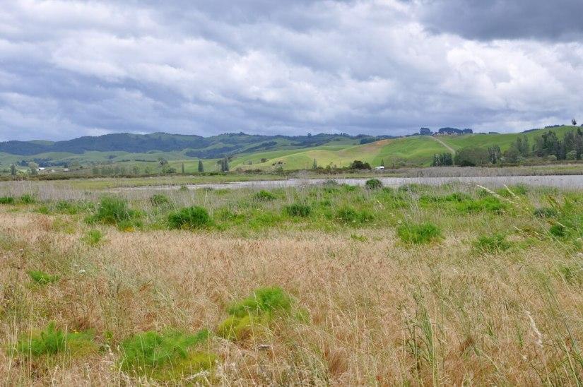 saltmarsh, Pukorokoro Miranda Shorebird Centre, north island, new zealand