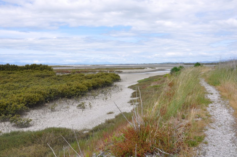 tidal lagoon, Pukorokoro Miranda Shorebird Centre, north island, new zealand