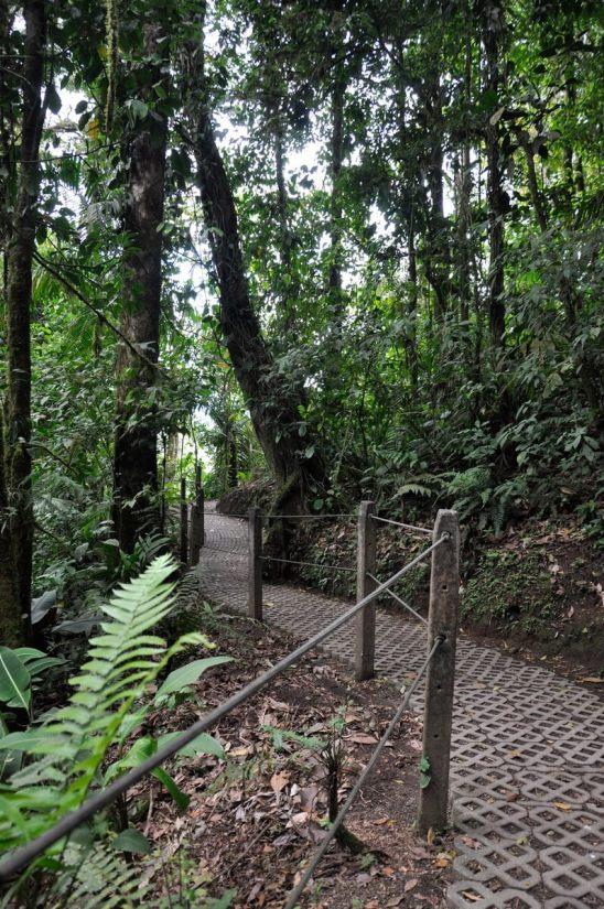 a trail in the rainforest, mistico arenal hanging bridges park, la fortuna, costa rica