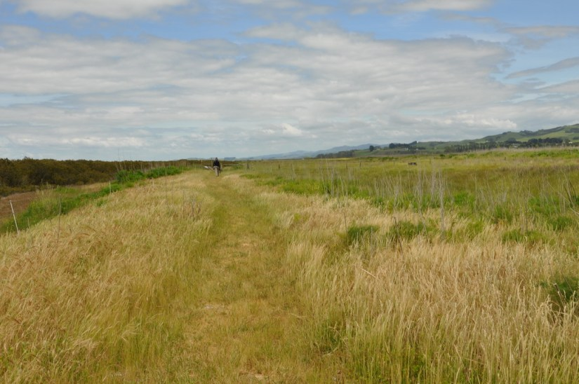 hiking trail, Pukorokoro Miranda Shorebird Centre, north island, new zealand