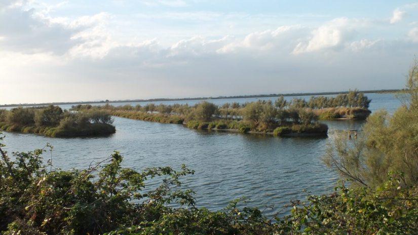 wetlands, Parco Regionale Veneto del Delta del Po (The Regional Park of the Po River Delta), italy